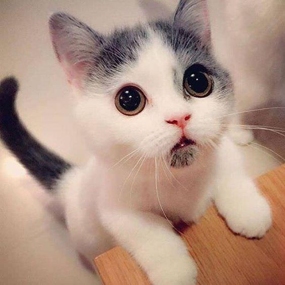 catの発音